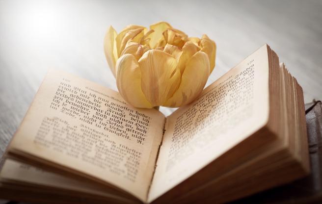 book-1325088_1920