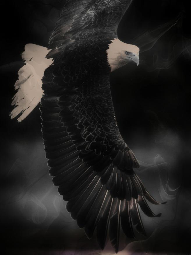 bald-eagle-436020_1920