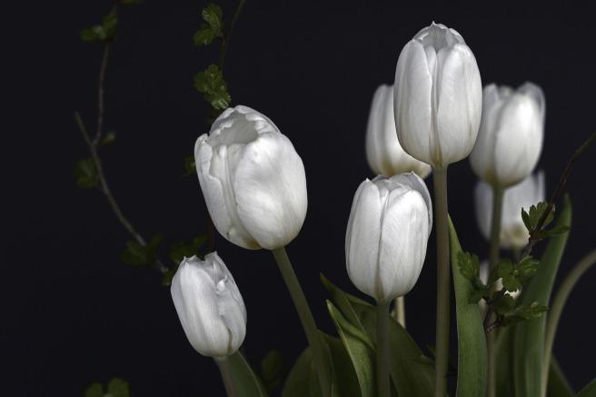tulips-1291681_1920