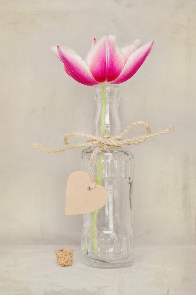 flower-1260261_1920